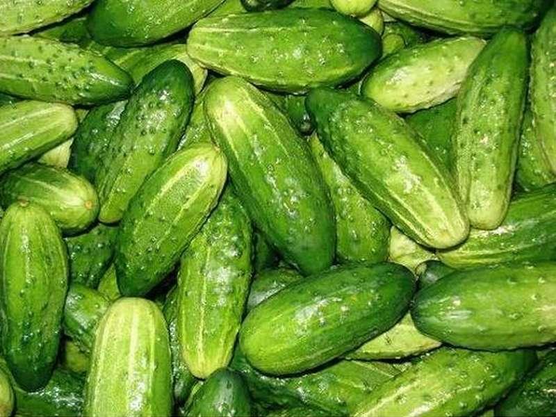 Ученые Германии установили источник кишечной инфекции