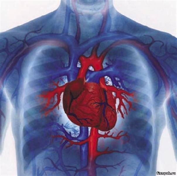 Универсальный препарат против заболеваний сердца