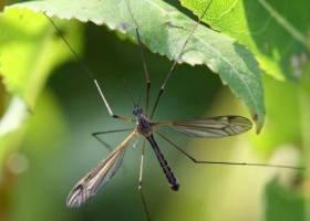 Малярия снова в Европе