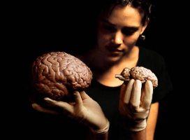 Секрет памяти раскрыт