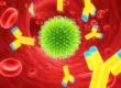 Иммуномодуляторы (иммуностимуляторы)