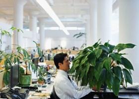 Комнатные растения защищают офисных работников от болезней