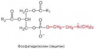 lecitin_formula