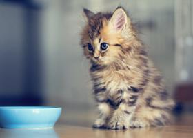 Просмотр фото котят улучшает внимание, а изображения пищи снижают аппетит