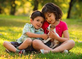 Игры с домашними животными защищают от аллергии