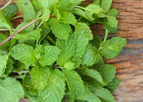 Аромат мяты поможет похудеть, а мятный чай – улучшить память
