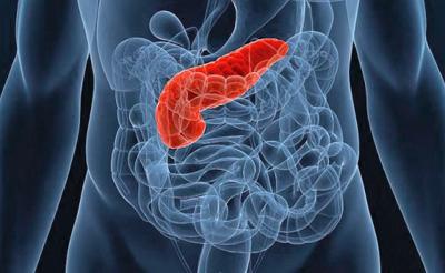 Расположение поджелудочной железы в организме человека