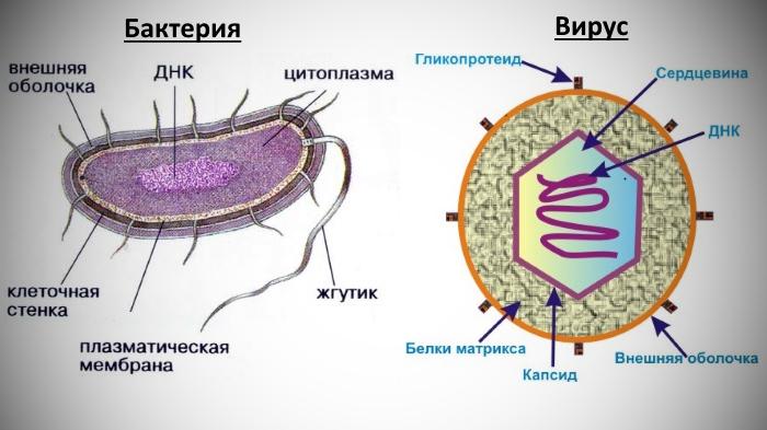 очищение от паразитов народными средствами