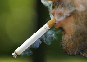 У курильщиков в легких возникают мутации, ведущие к онкоболезням
