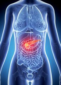 Расположение поджелудочной железы в организме