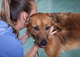 Как определить лейкоз у собаки
