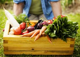Фрукты и овощи благоприятно влияют на интеллектуальные способности