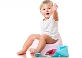 В каком возрасте нужно начинать приучение?