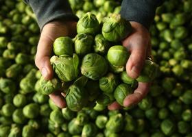 Зеленые овощи продлевают молодость
