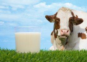 Коровье молоко: состав