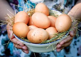 Ежедневное употребление яиц укрепляет сердце