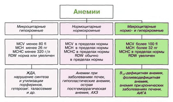 Основные виды анемии