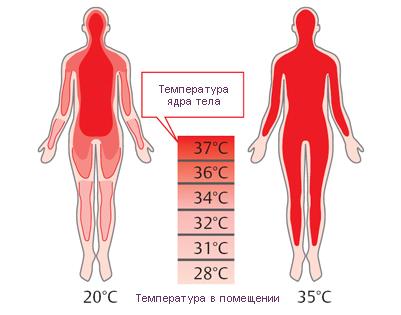 Температурные зоны тела