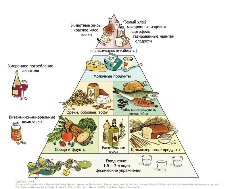 Пищевая пирамида питания для похудения — что это?