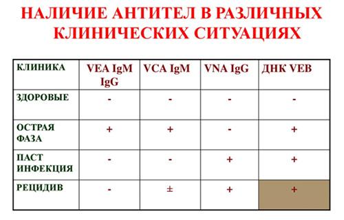 Вирус Эпштейна-Барра