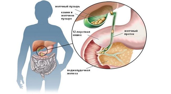 Поджелудочная железа и желчный пузырь