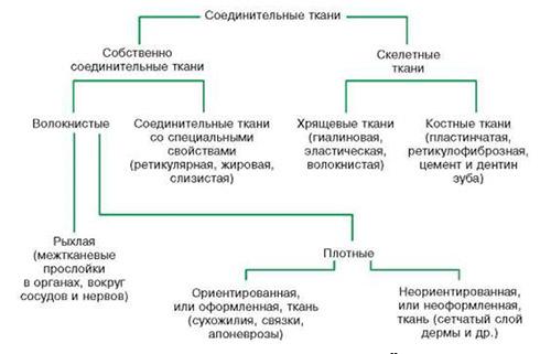 Дисплазия соединительной ткани