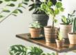 Комнатные растения не помогают очищать воздух