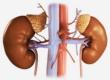 Надпочечниковая недостаточность и заболевания надпочечников