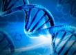 Синдром Прадера-Вилли, синдром Нунан (наследственные заболевания человека)