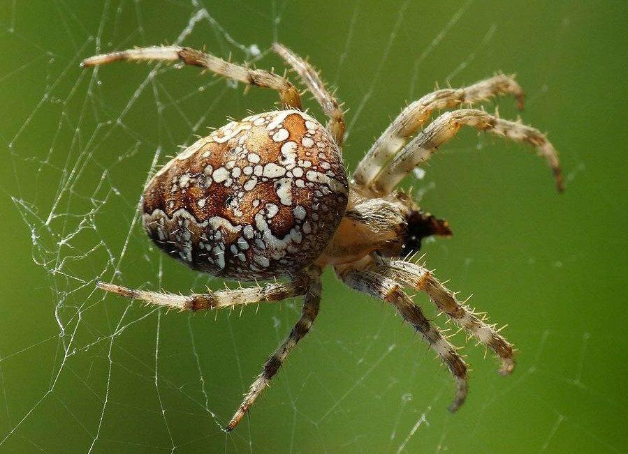Укус паука